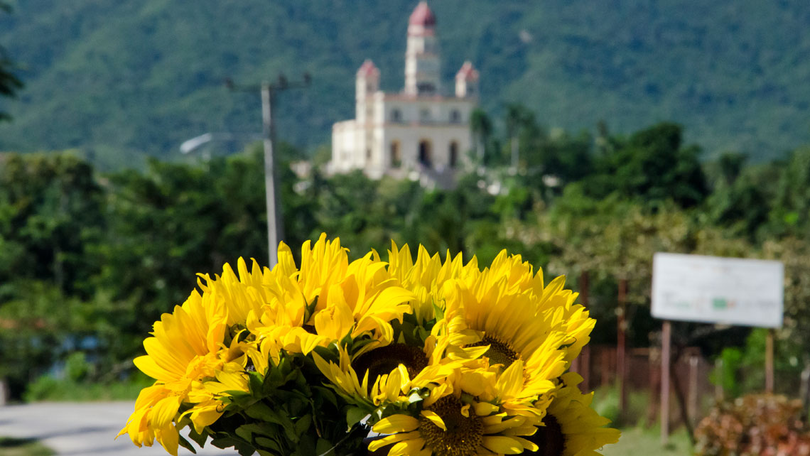 Sunflowers and in the background is the Basilica del Cobre