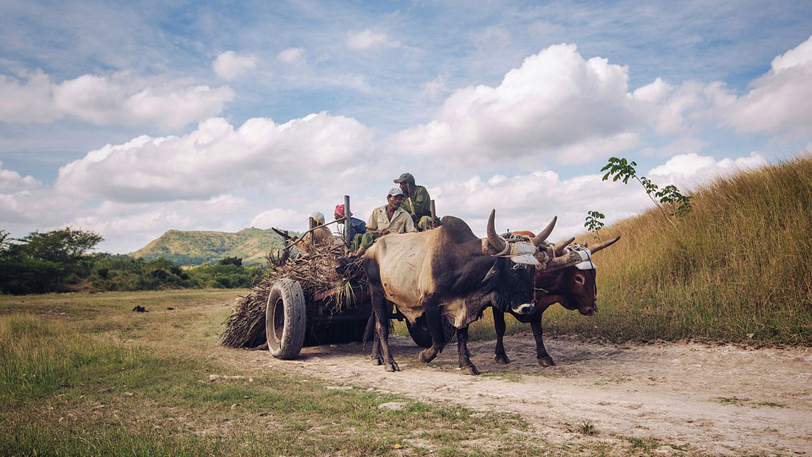 Local men on ox driven cart in Cuban countryside