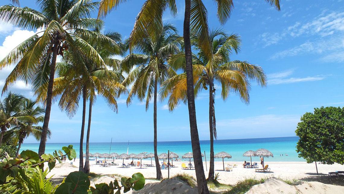 Palm trees on Varadero beach