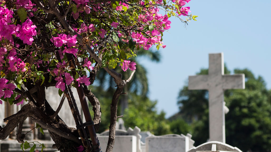 Vegetation in Necropolis de Colon, Havana
