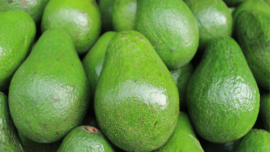 Cuban variety avocados