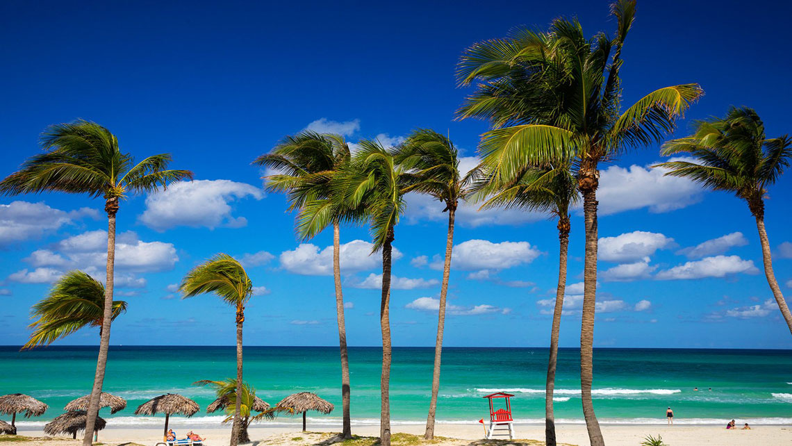 Coconut tress in a sandy beach