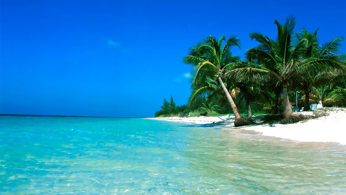 Coconut palm tress near cristal clear waters