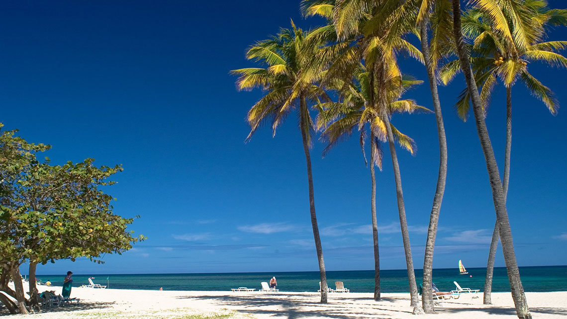 Coconut palm trees in Playa Jibacoa