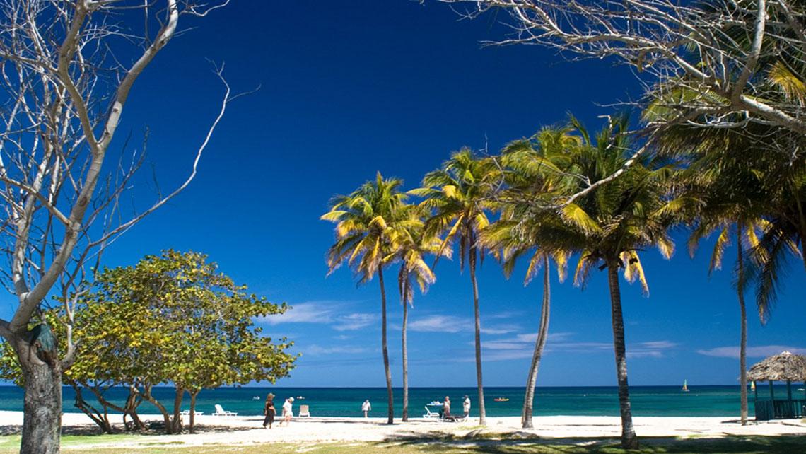 Vegetation in Playa Jibacoa
