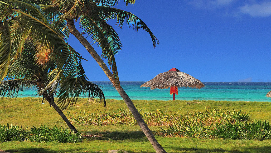 Palm trees in Playa Covarrubias