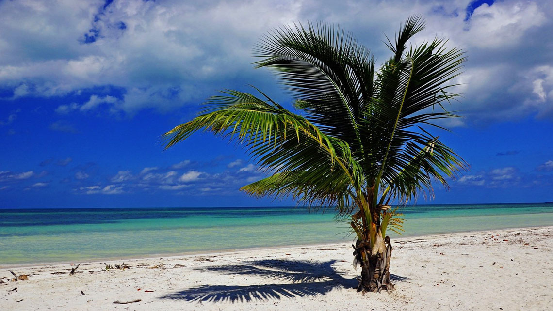 Young coconut palm tree by the beach