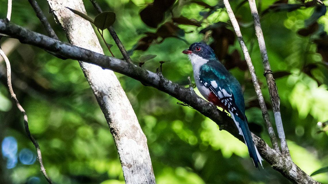A colourful bird on a brand in Cienanga de Zapata