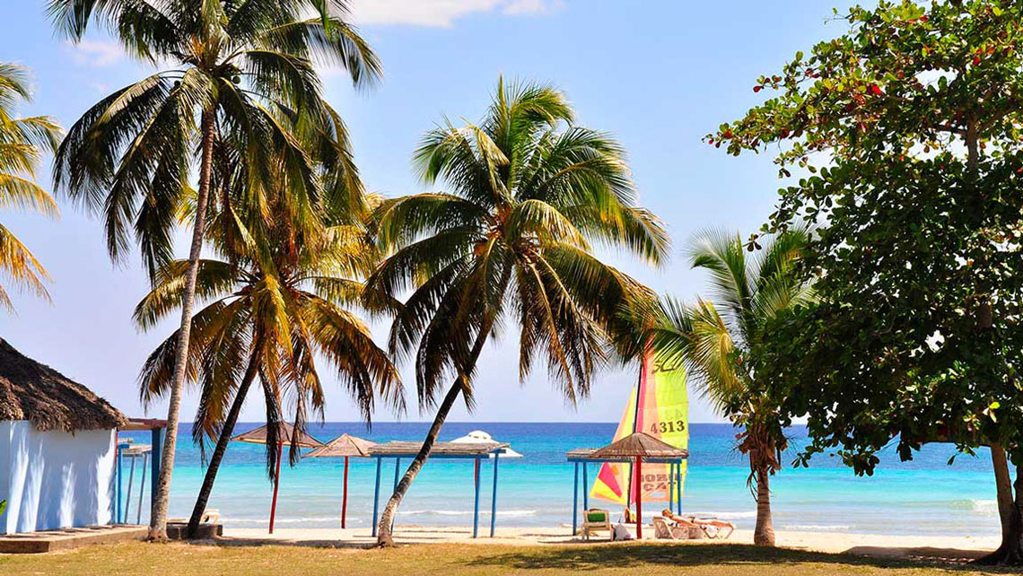 Coconut trees on a sanndy beach