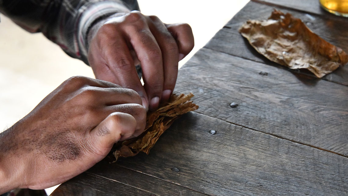 Hands of a man rolling a cuban cigar