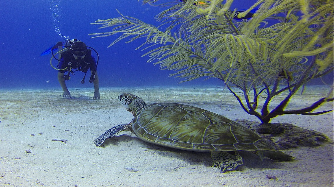 Cuba Diving Experiences
