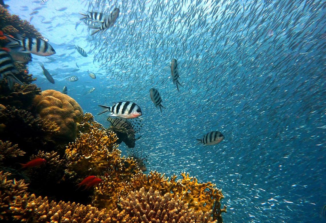 Diving West Cuba